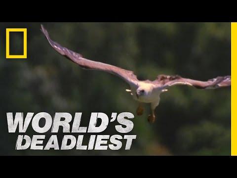 Mid-Air Eagle Fight | World's Deadliest