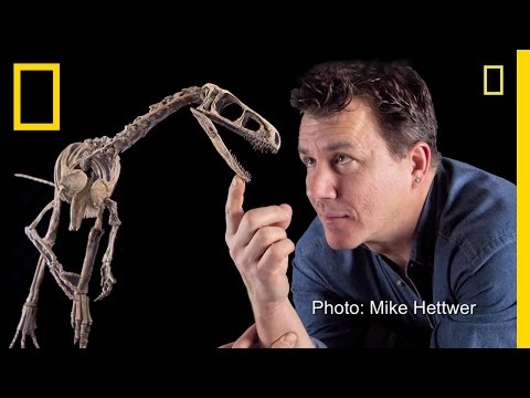 """Fast, """"Nasty"""" Little Dinosaur Discovered 