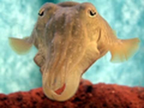 Cuttlefish: Chameleons of the Sea