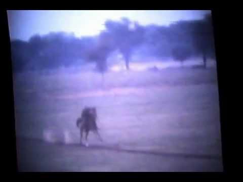 61st Cavalry Regiment, Indian Army, Jaipur 1979.