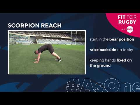 Fit for Rugby with Vitality | Animal Series 1