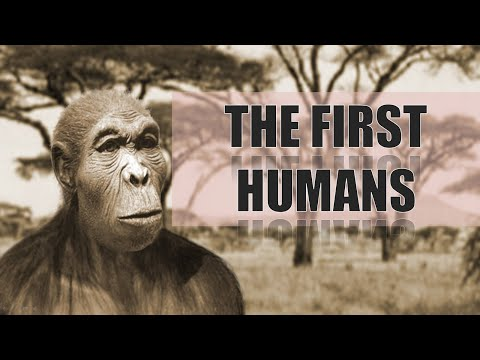 The First Humans | Homo Habilis