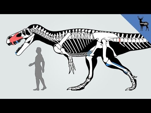 New Dinosaur Discovered in Portugal!
