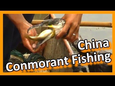 China 2005 28 - Fishing with cormorants