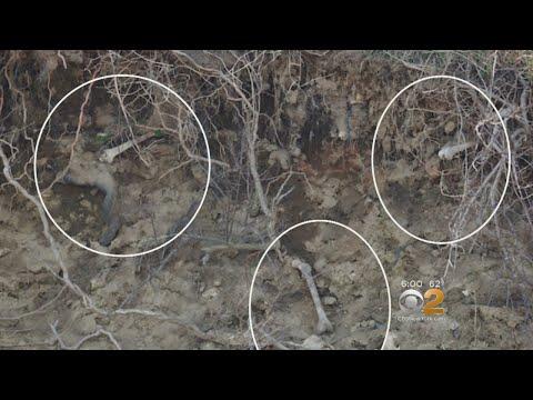 Hart Island Erosion Unearths Skeletons