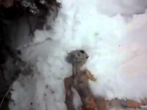 UFO Video of dead alien found in snow in Russia - UFO crash?