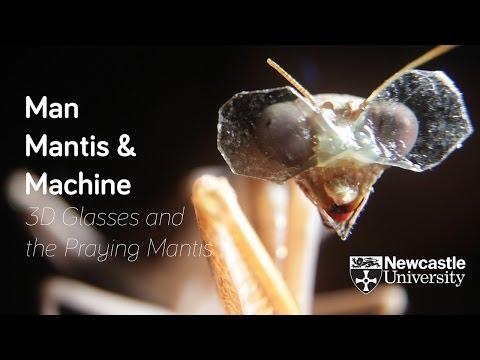 Computation Of 3D Vision In Praying Mantises