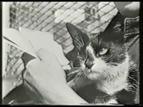 Sidney Horton with simon the ships cat