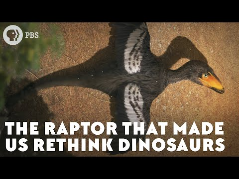 The Raptor That Made Us Rethink Dinosaurs