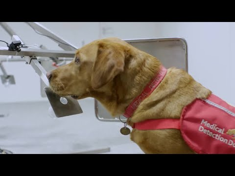 Dogs Can Smell Cancer | Secret Life of Dogs | BBC Earth