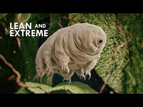 Tardigrades: The Most Resilient Animals in the Universe