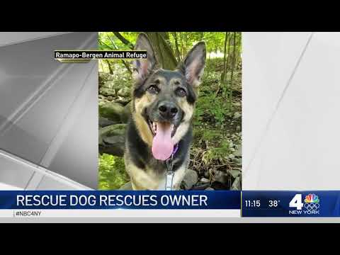 Rescue Dog Hailed a Hero After Helping Save NJ Owner's Life as He Suffered Stroke (NBC 4 NY) (RBARI)