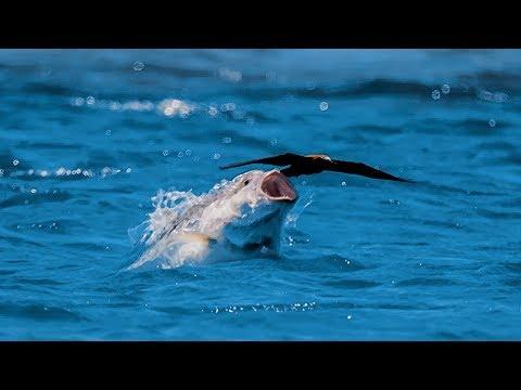 Bird vs Fish | Blue Planet II