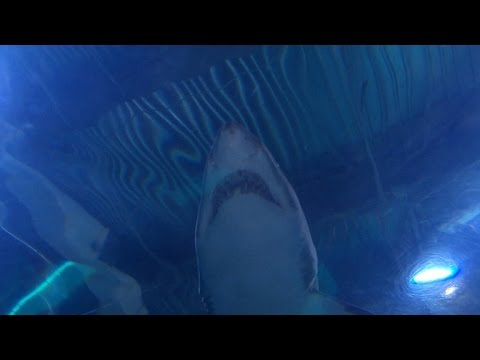 """The infamous 1916 shark attacks that inspired """"Jaws"""""""