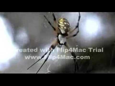 huge Spider Web Spun in Texas