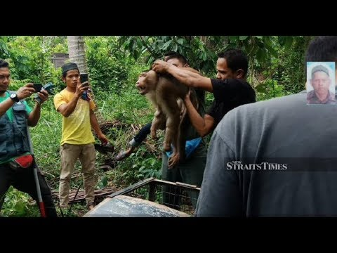 Owner dies after bitten by pet monkey