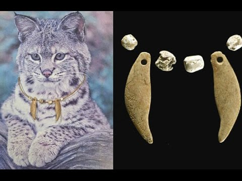 2000 Year Old Collar on Bobcat a Strange Finding for Archaeologists
