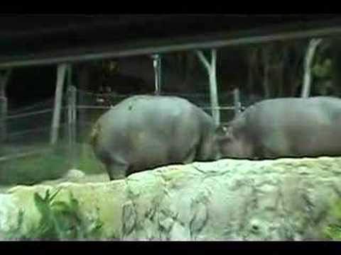 Hippo Poo Blender