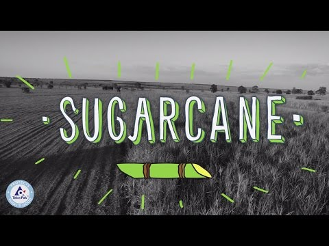 Plant-Based Plastic Made from Sugarcane
