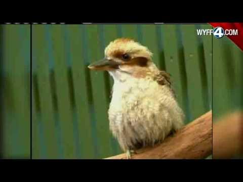 Overweight Bird Gets Personal Trainer