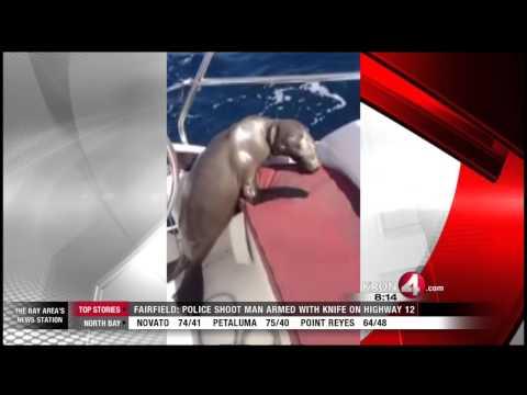Rape Within Sea Otter Community