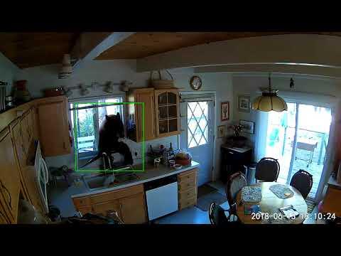 South Lake Tahoe Bear Home Invasion 4