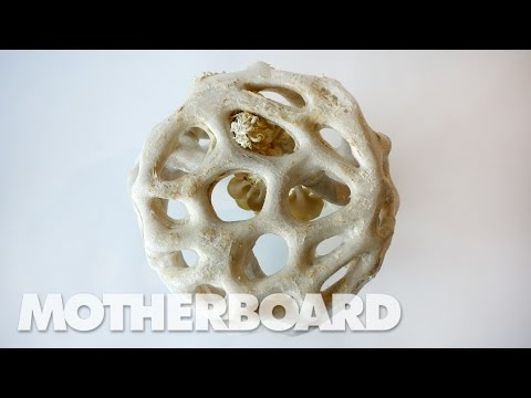 Fungus: The Plastic of the Future