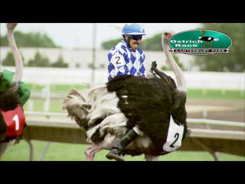 Canterbury Park Extreme Day Ostrich Race 7-16-16