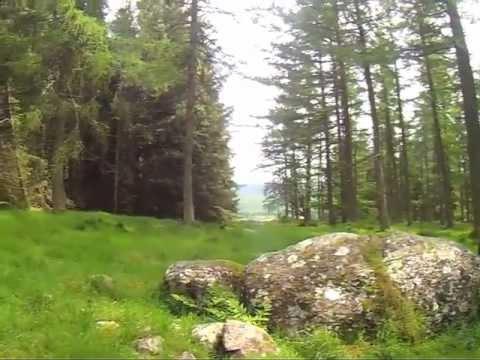 Nine Stanes at Mulloch Wood NE Scotland