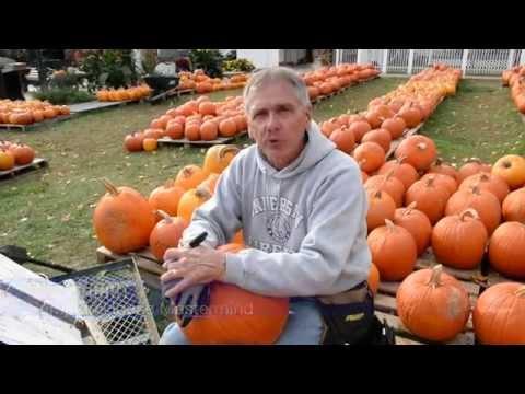 3,000 Pumpkins Later, Famous W.Va. Pumpkin House is Ready