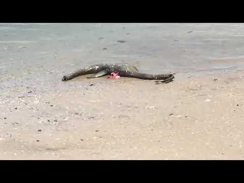 Unknown creature found on barrier islands