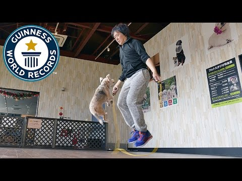Most skips by a dog and a person - Guinness World Records