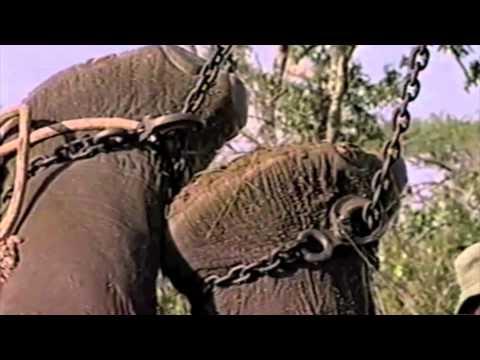 Teen Elephants Gone Wild - from David Tereshchuk