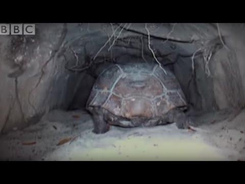 Attenborough: The Wonders of Tortoise Tunnel   BBC