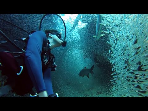 GoPro: Enchanting Scuba Dive with 1 Million Fish