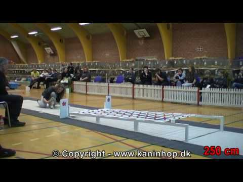 Danish Championships 2010 in Rabbit Hopping
