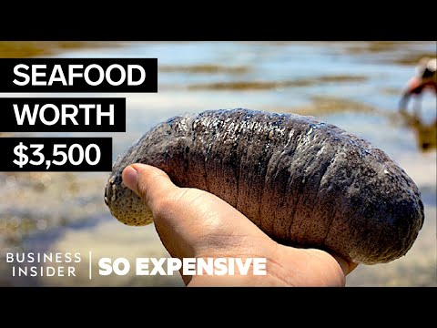 Why Sea Cucumbers Are So Expensive | So Expensive