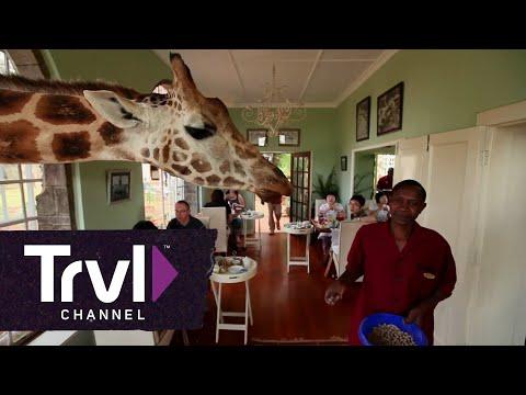 Dine With Giraffes at Giraffe Manor | Travel Channel