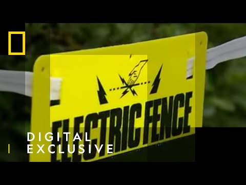 What Would Happen if You Peed on an Electric Fence? | National Geographic UK