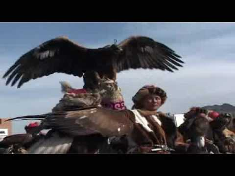 Golden Eagle Hunting Wolf