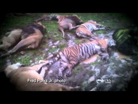 Zanesville, Ohio: Hunt for Escaped Exotic Animals