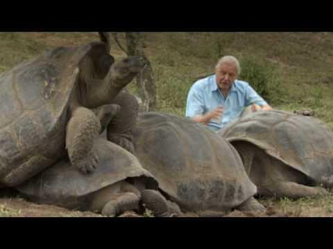 The Galápagos Tortoise