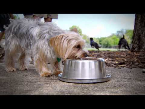 Frosty Bowlz: Pets & Animal Care TV Commercial