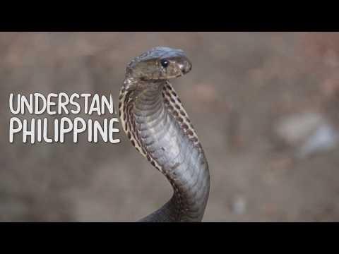 Philippine Cobra (1/3) - Understanding the Naja Philippinensis