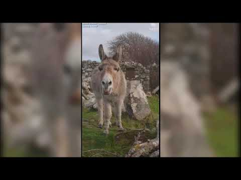 """""""Harriet"""" the Singing Donkey is positively operatic!"""