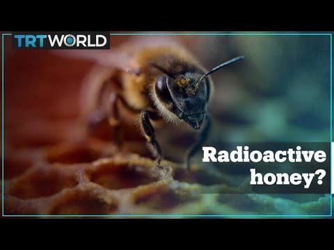 Radioactive contamination in American honey