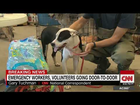 Families reunited with pets lost in the floods
