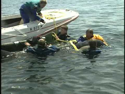 Orphan Orca: Saving Springer