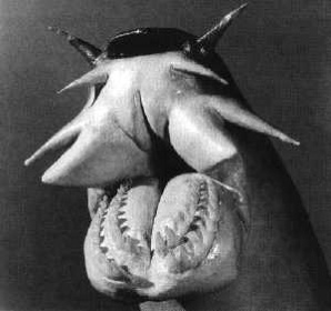 Things that make you say EWWWW 458373-hagfish-tm
