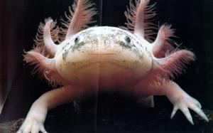 Things that make you say EWWWW Axolotl-tm